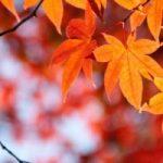 京都の紅葉2014!見頃の時期をスポット別にご紹介!